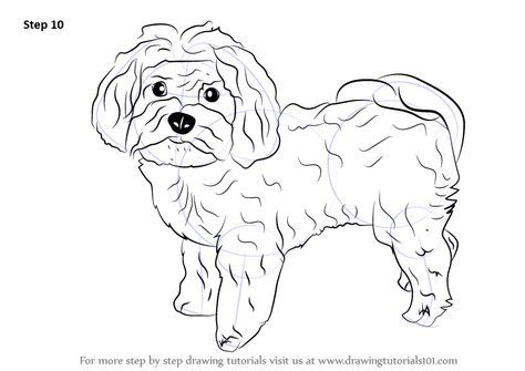 Dogs Maltese Draw 40+ Ideas   – Crafts