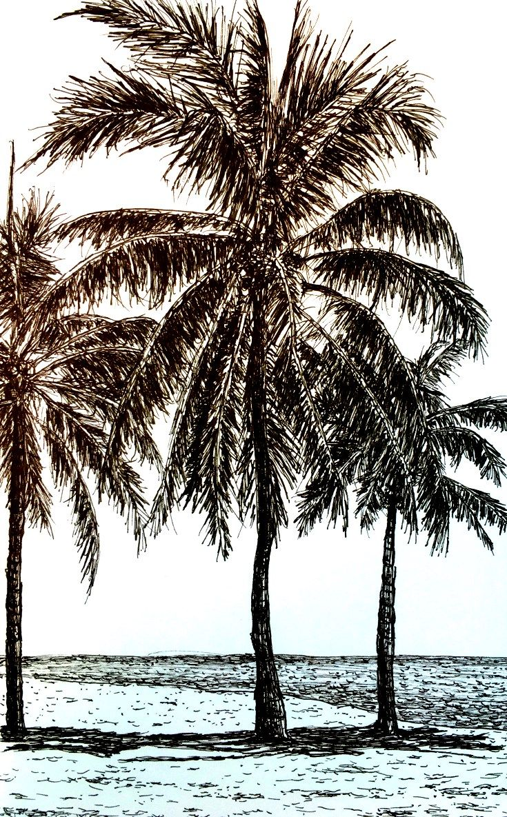 Pen and ink palm trees drawing how to draw in realistic style with