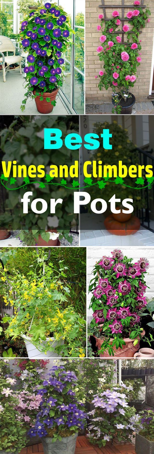 SO many good ideas for climbing flowers