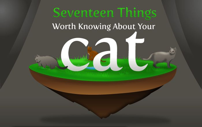 17 Things Worth Knowing About Your Cat According To The Oatmel