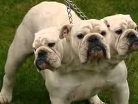 d2xuQ1NtM1Y0LTQx_o_2-3-headed-animals-dog-snake-sheep ...