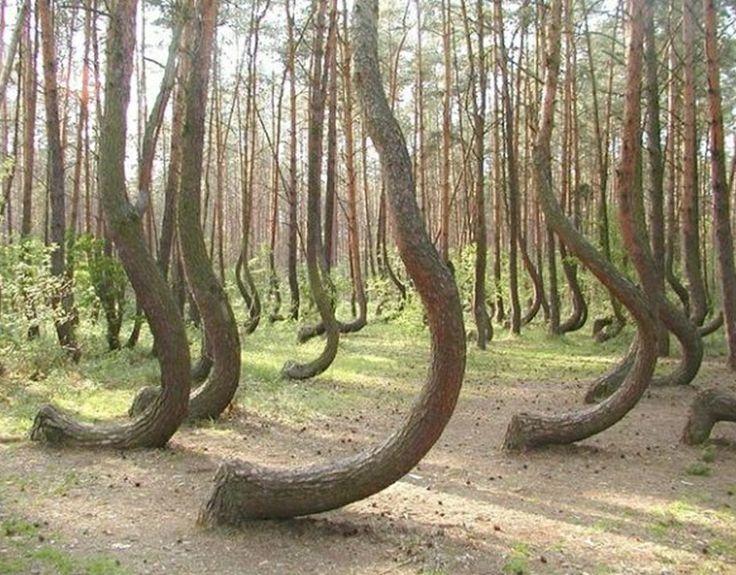 Árvores Estranhas