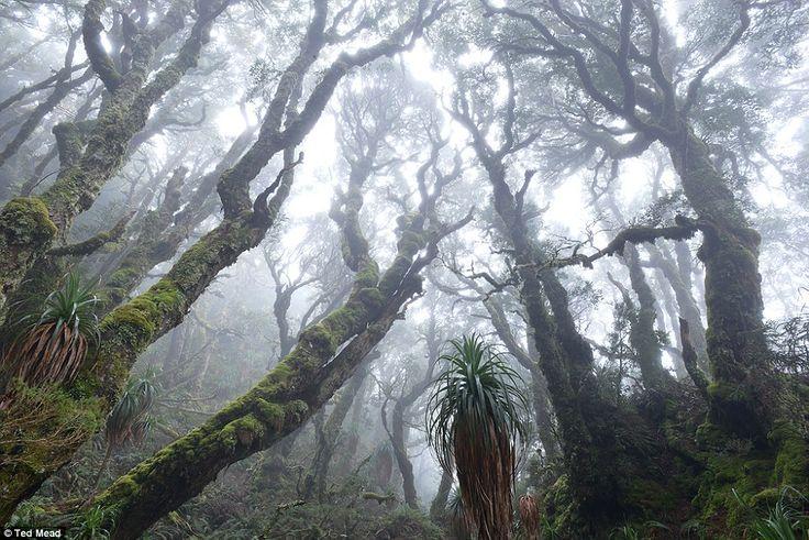 Botanical winner - 'Myrtle Glade' by Ted Mead, Tasmania: 'Deep in the Tasmanian wilderness...