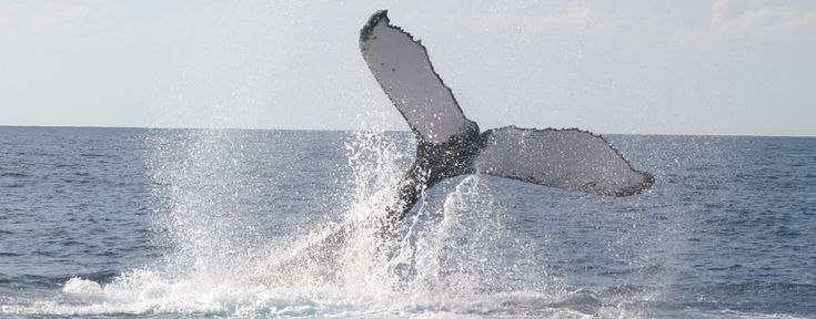 Quick! Take a #picture! #Boaters are invited to help track whale movements. Learn more about this volunteer effort.