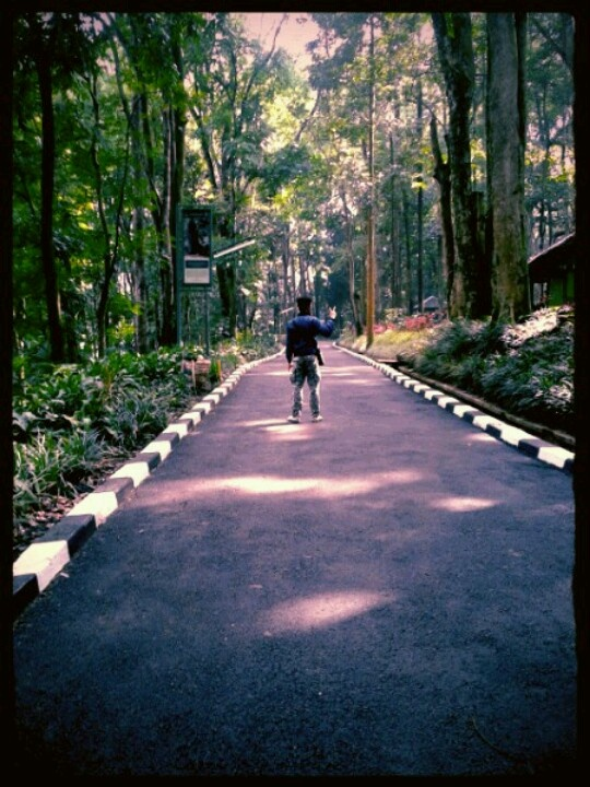 @ Juanda forest park