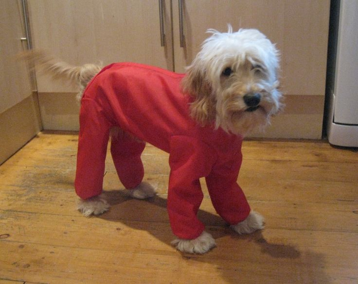 Doggie Coats - Trouser Suit Waterproof Dog Coat, (http://www.doggiecoats.co.uk/our-coats/trouser-suit/trouser-suit-waterproof-dog-coat)