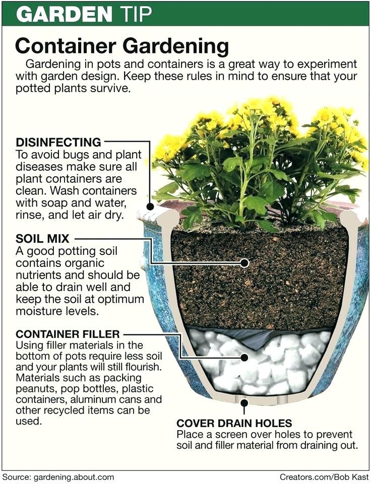 Pinterest How To Layer A Container Garden Google Search