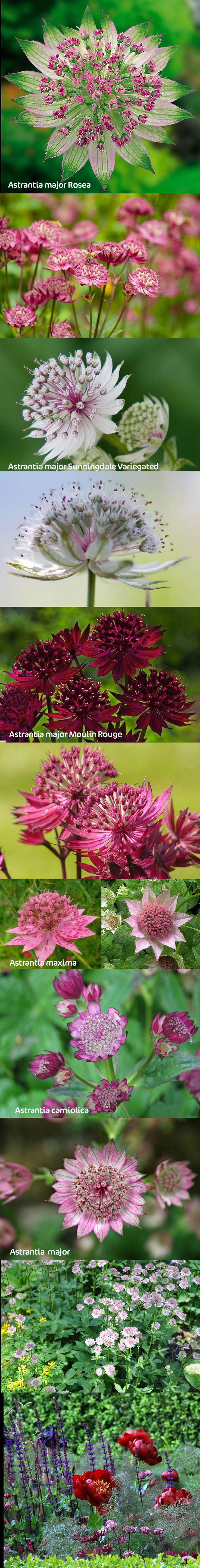 M s de 15 ideas fant sticas sobre plante herbac e en for Plante ornementale