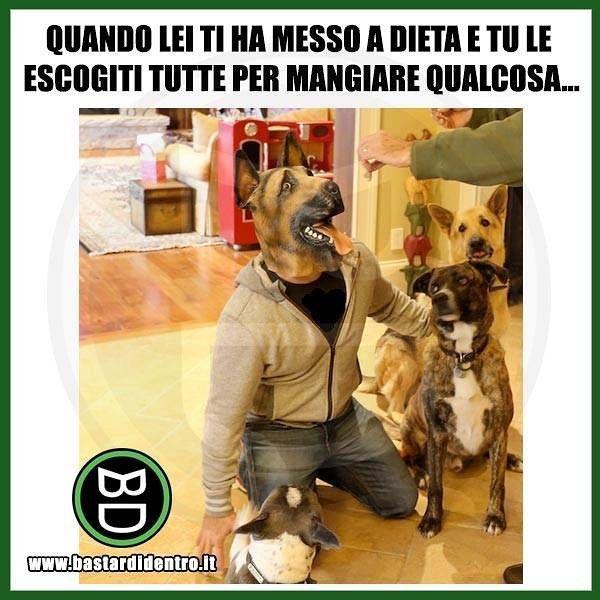 Dieta da #cani : come venirne fuori scaltramente! Seguici su youtube/bastardidentro #bastardidentro… www.bastardidentro.it