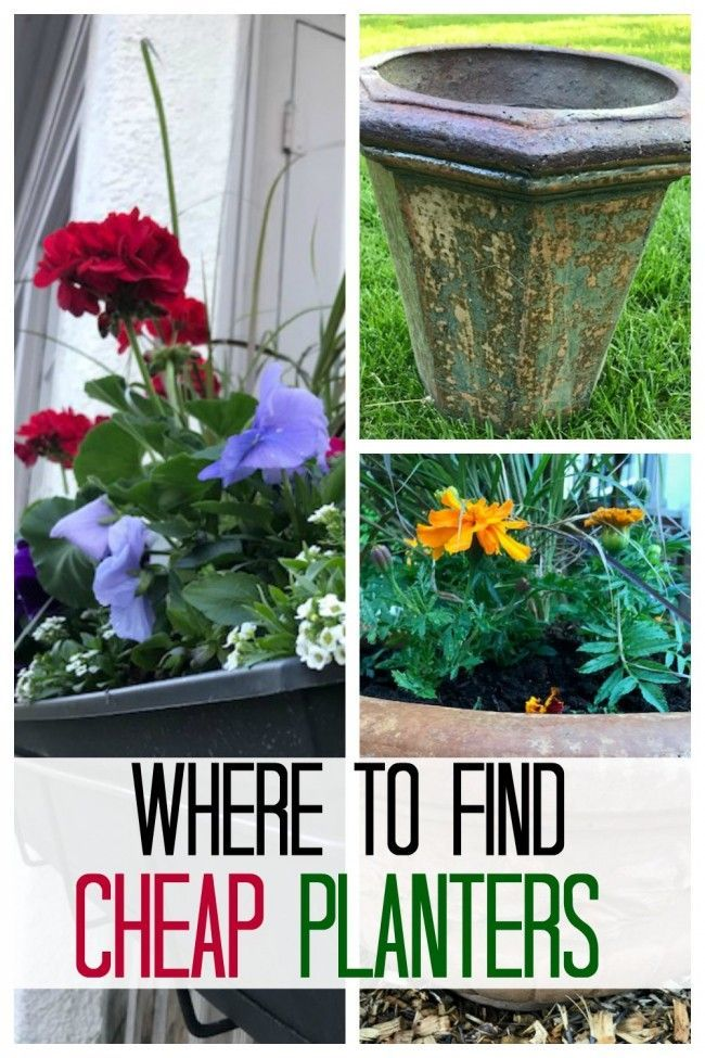 Buying Beautiful Planters On A Budget Container Gardening