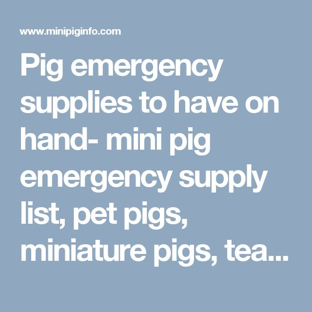Pig emergency supplies to have on hand- mini pig emergency supply list, pet pigs, miniature pigs, teacup pigs, micro pigs. - Mini Pig Info