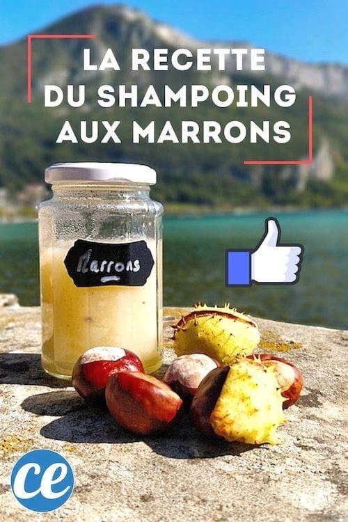 La Recette Incroyable Du Shampoing Aux Marrons (Facile à Faire Et Gratuit). (avec images ...