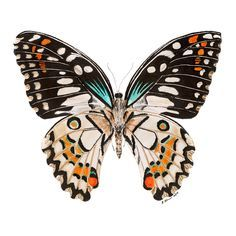The flittering butterfly print is a reproduction of Brett Blumenthal's watercolor painting. The wall décor makes wonderful home decor for a garden themed room or can be paired with other forest critte