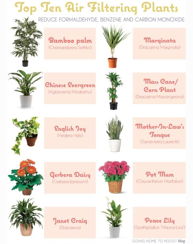 Breath easy.....some other health related indoor plants that clean the air