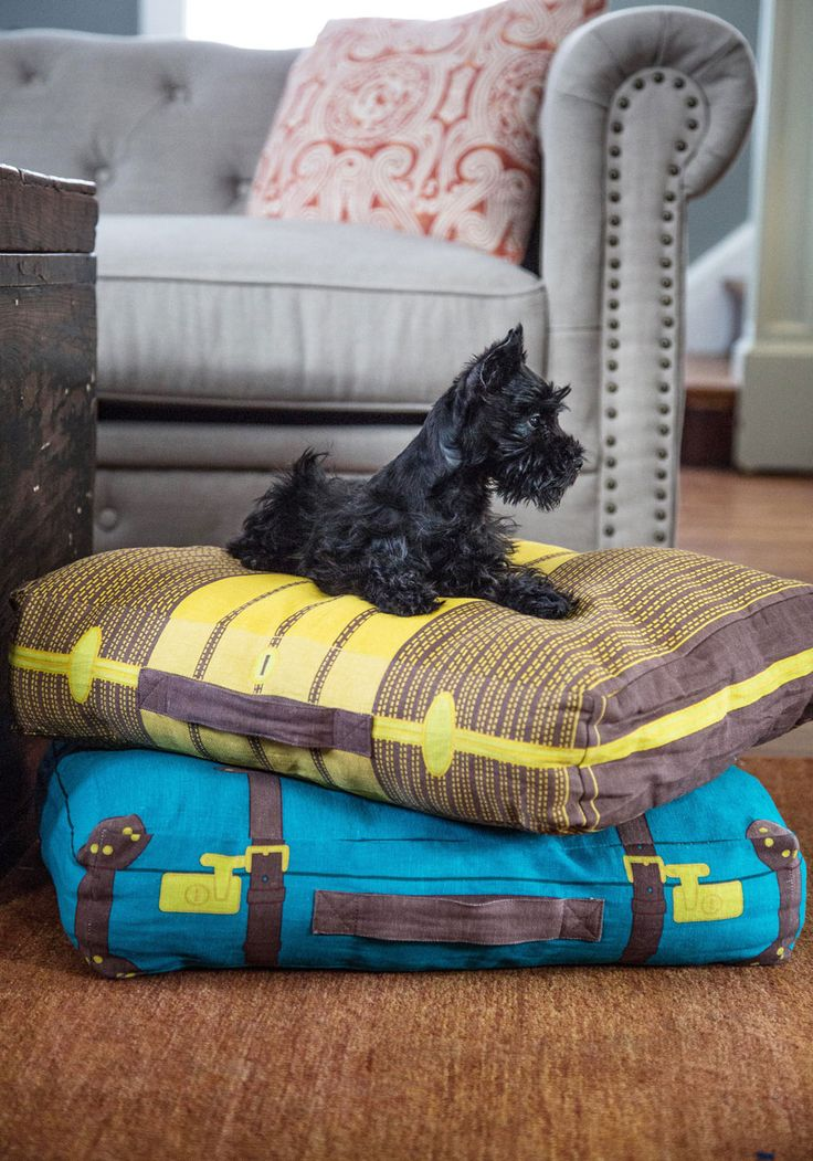 Luggage Floor Cushions.  I love that pup!   Take a Trip to Dreamland Floor Cushion, #ModCloth