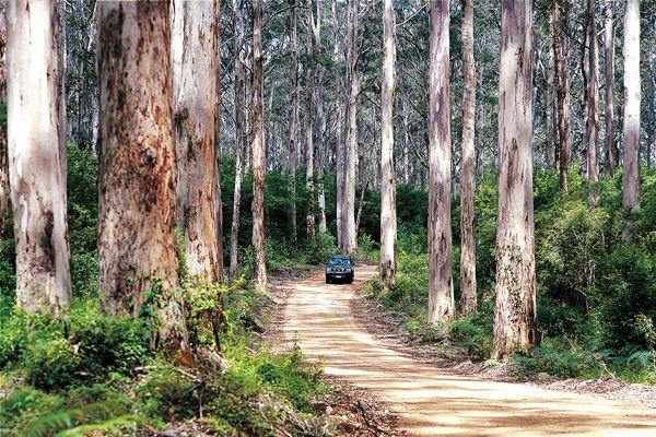 Western Australia - Boranup Forest, Leeuwin-Naturaliste NP