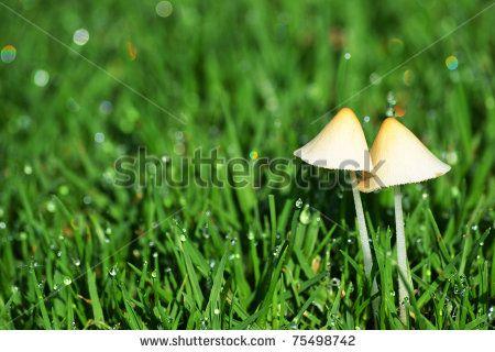 Mushroom pair by ByBethy, via ShutterStock
