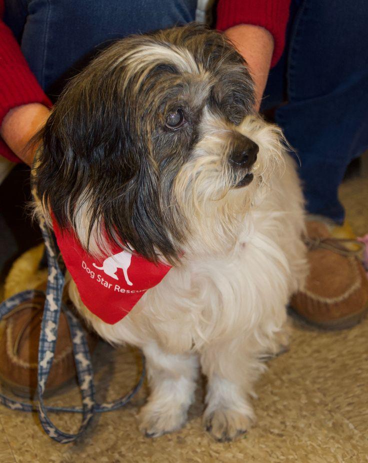 Havashu dog for Adoption in Canton, CT, USA. ADN773236 on
