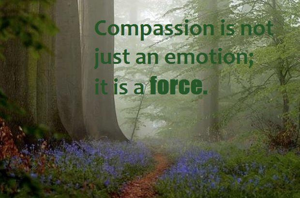 Inspirational Meme About Compassion: 109 Best Dalai Lama Images On Pinterest