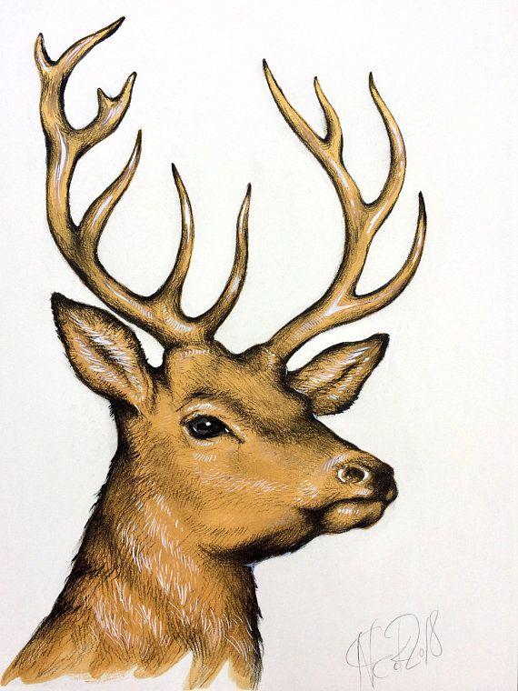 Прикольные картинки оленя для срисовки, приколы картинках надписями