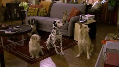 Robin Scherbatsky's dogs. Reason why I believe I will one day soon turn into Robin Scherbatsky.