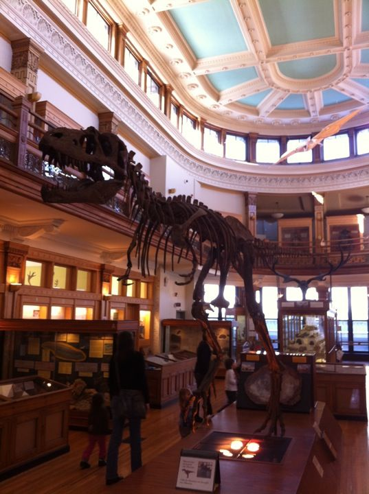 Musée Redpath Museum in Montreal, QC -- Taxidermy & fossils