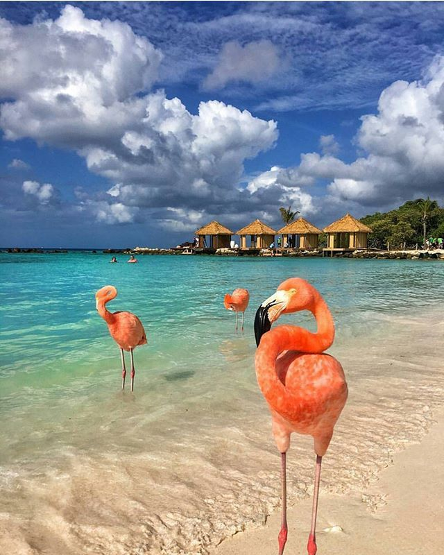 Thanksgiving 2017? Hilton Resort at Palm Beach, Aruba Photography by @cbezerraphotos