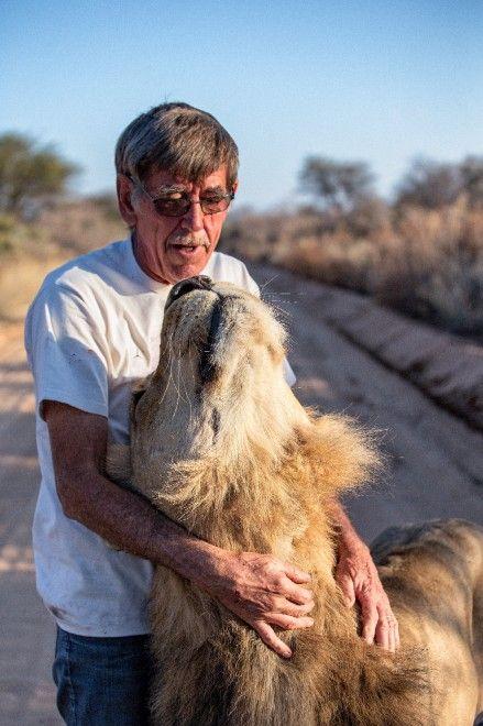 Un leone per amico.