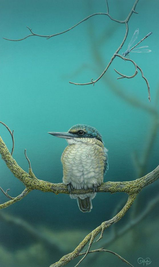 SACRED KINGFISHER AND DAMSELFLY BY CHRISTOPHER POPE
