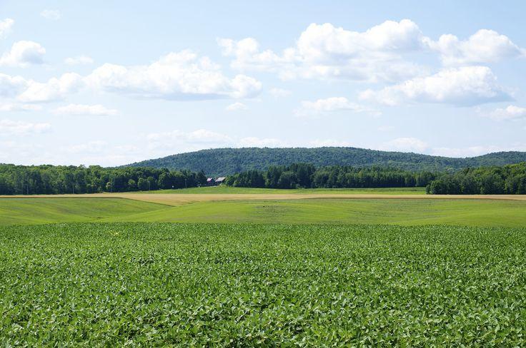 Les champs dans Portneuf