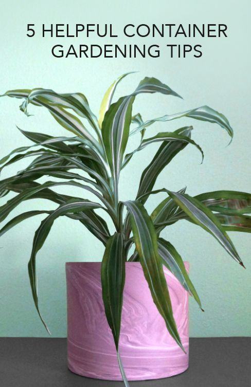 5 Helpful Container Gardening Tips
