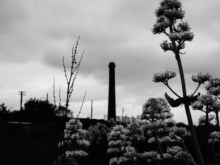 Weed and chimney