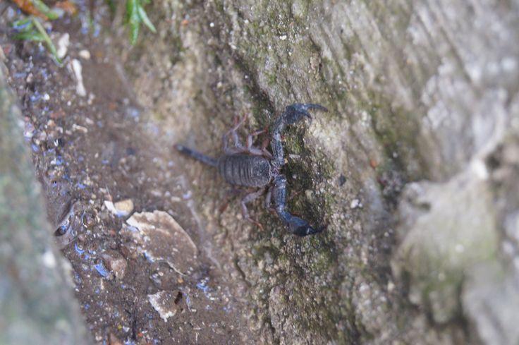 #scorpion