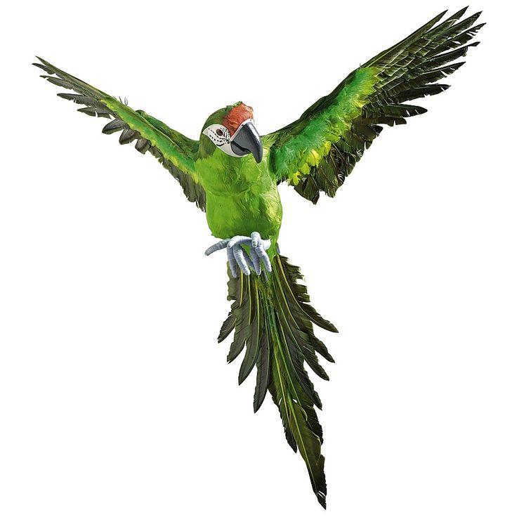 les 25 meilleures id es de la cat gorie perroquet vert sur pinterest voli re d 39 oiseaux le. Black Bedroom Furniture Sets. Home Design Ideas