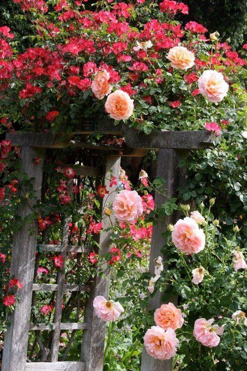 Pink Flowers over garden door