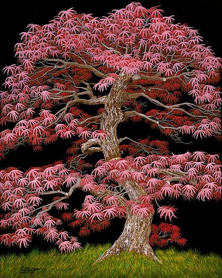 """Red Maple Bonsai"" is an acrylic painting of a Red Maple Bonsai Tree on a black background.  This is a powerful image of a majestic bonsai tree."