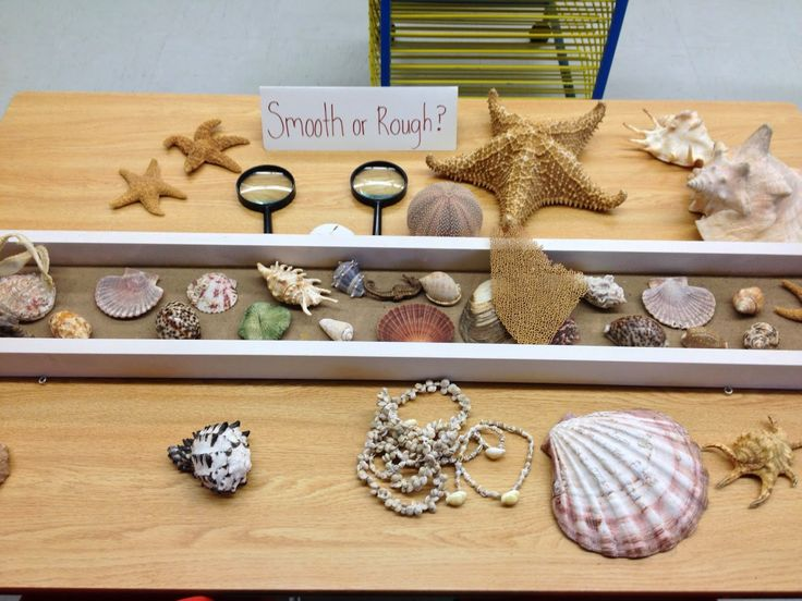 Sticks, Stones & Sparkly Pinecones ...Explore, Create
