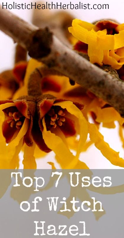 The 7 Top Uses of Witch Hazel | Holistic Health Herbalist .. from healing acne and black heads to helping a sunburn.