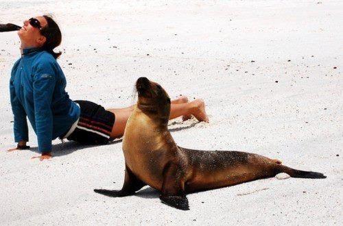 Upward facing seal... Tee hee