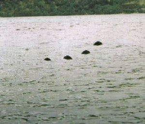 Paranormal And More For You: Lake Murray Lake Monster Appears Again. Since 1933 people have seen the Lake Murray Lake Monster. You just have to see the photos, videos, and read the story about this one. Its creepy #Creepy #Paranormal #Spooky