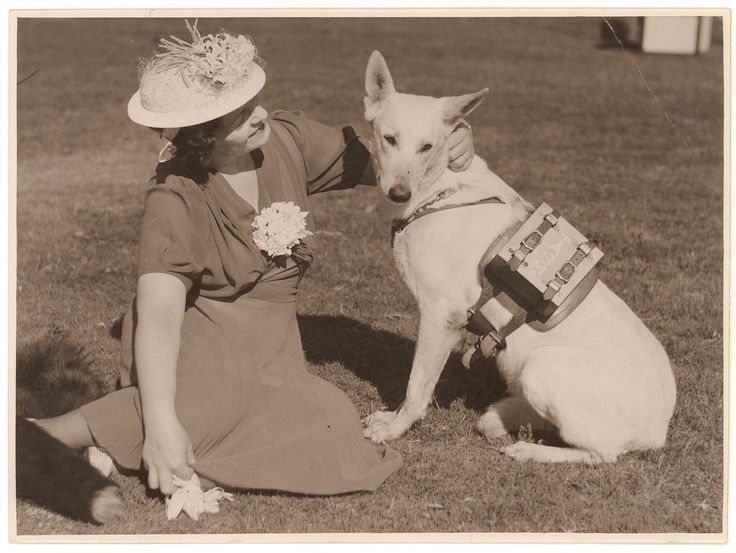 "Woman with police dog ""Zoe"" with a radio receiving set on her back. [Circa 1939] http://ift.tt/2n9TAmQ"