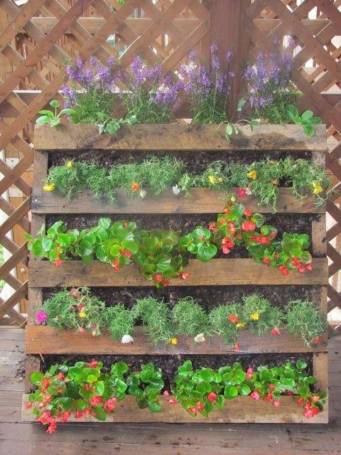 42 best images about succulent wall on pinterest for Pallet succulent garden