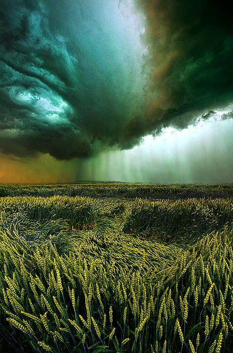 """✯ """"Against the Wind"""" Horizons by Phil Koch - Milwaukee, Wisconsin"""