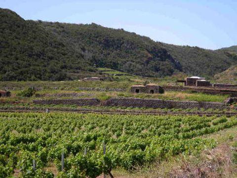 Recensione del vino Moscato Liquoroso di Pantelleria