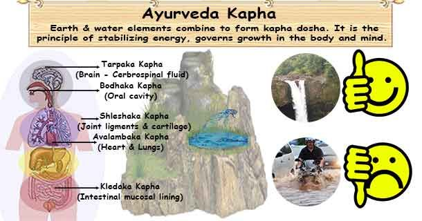 "Kapha is a Sanskrit word ""Ka"" means water and ""pha"" means flourish. Kapha is maintaining structure of the body keeping it moist and well lubricated."
