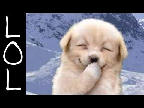 Funny Dogs - World's Funniest Dog Video Ever! - YouTube