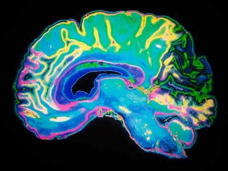 The Neuroscience Behind Stress and Learning