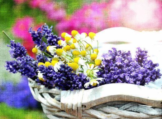 Πως Να Φτιάξεις Σαπουνάκια Με Λεβάντα Και Χαμομήλι Στο Σπίτι | Misswebbie.gr