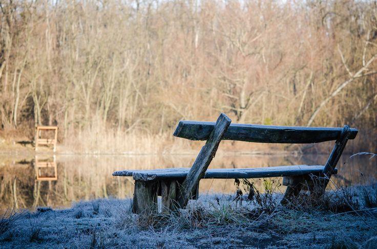 Róth Hajnalka Megpihenve December 27-én készült a kép, a több napja tartó ködös időben fent a Vértesben szikrázóan sütött a Nap, és a reggeli fagy egy csipetnyi téli hangulattal is megajándékozott minket.  Több kép Hajnalkától:  https://www.facebook.com/nalkaroth/