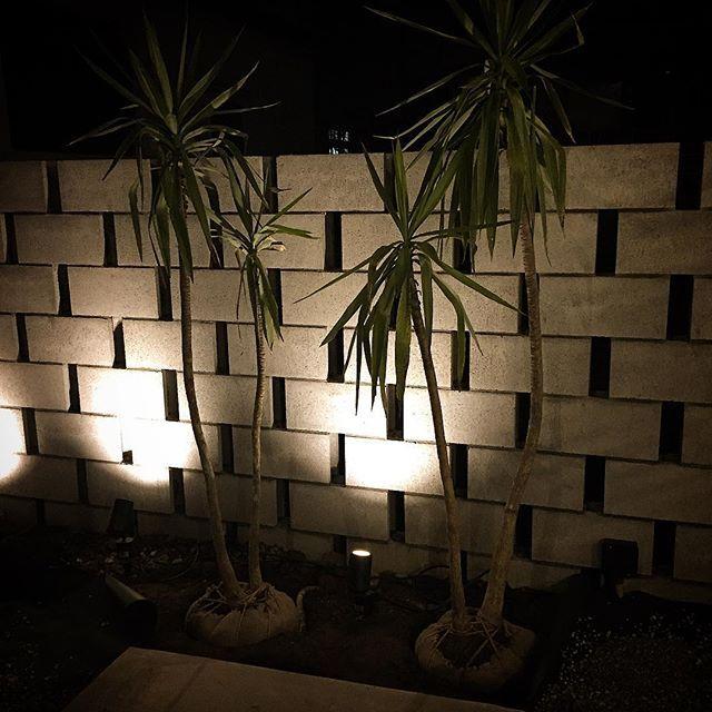 Instagram【tricksinc】さんの写真をピンしています。 《都内長屋の外構はブロックの透かし積みとドラセナで。基本寒さに弱い樹種ですが元気に冬を乗り越えて欲しいです。 #trickscarpentry #tricksdesign #新築 #長屋 #夜景 #外構 #透かし積みのブロック #ドラセナ #ユッカ》